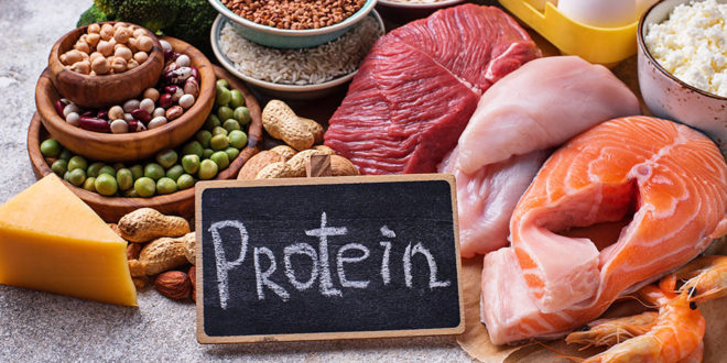نسبة البروتين الطبيعية في الدم